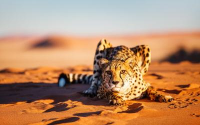 Namibie | Etosha NP - Gepard v dunách