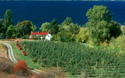 Kanada | vinice poblíž Niagara Falls