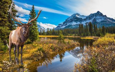 Kanada   Rockies