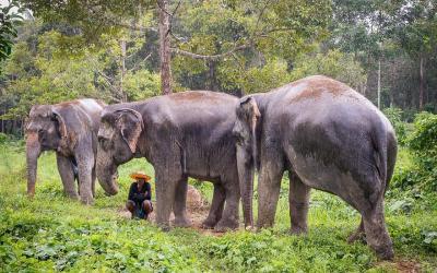 Phuket_Elephant Sanctuaries